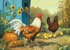 country-chickens (165 pieces)