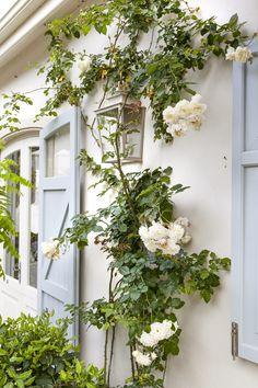 Designer: Tirzah Stubbs Style: Classical Garden Type: Private Garden Garden Types, Private Garden, South Africa, Gardens, Projects, Design, Home Decor, Style, Log Projects