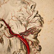 Cardiovascular system.  Please repost.  Vintagemedstock.com