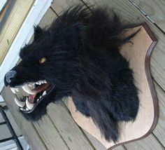 Buy wolf mask. Fill with spray foam and mount to plaque! ~ Wicked