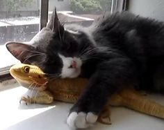msn animals loving other animals photos | ... and Puff the Dragon Love Each Other - Animal Planet: Animal Oddities