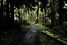 Point Defiance trail!