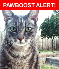 Please spread the word! Shade was last seen in Lubbock, TX 79414.    Nearest Address: Near Chicago Ave & 44th St