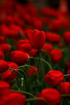 czerwień, niesamowita