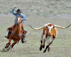 Cowboy roping a longhorn at Sombrero Ranch, Colorado USA. Longhorn Rind, Longhorn Cow, Longhorn Cattle, Cowboy Girl, Cowboy Horse, Cowboy And Cowgirl, Cowboy Ranch, Western Riding, Western Art
