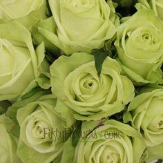this with purple hydrangea??? FiftyFlowers.com - Green Tea Bulk Green Rose