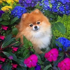 Ginger and I would like to wish all the moms out there a beautiful Mother's Day!!!!! ---------------------------------------------------- If you haven't already we would love if you could go to @sportleash and like Ginger's flower pic #2 to vote for us in the #sportleashbloomingfun contest! Thx dear friends! by monique_ginger