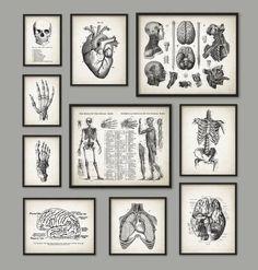 Anatomie humaine Antique Art Print Set de 10 - décoration Vintage anatomie - Antique livre plaque - étudiant en médecine cadeau idée photo Set de 10 Imprimés avec les encres haute qualité darchives sur papier darchivage poids lourd avec un fini mat lisse. Un cadeau fantastique ou un fabuleux ajout à votre maison ! Ce magnifique ensemble est composé de : 2 x 11 x 14 affiches (squelette/muscles + tête/cerveau anatomie) 4 x 8 x 10 affiches (coeur + squelette torse + cerveau artères ...