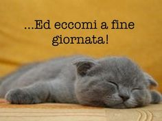 immagini stanchezza e sonno Animals And Pets, Funny Animals, Funny Pins, Good Mood, Good Night, Smile, Facebook, Lighthouse, Stress