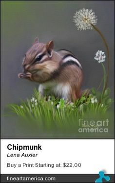 Chipmunk ©Lena Auxier PLEASE DO NOT EDIT OR REPIN UNCREDITED