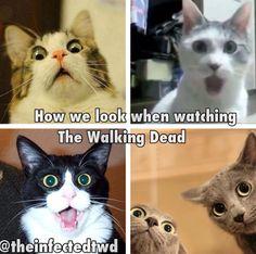 Yep!It's the two grey cats that kill me  *LOL*