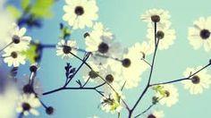 https://www.google.co.uk/search?q=spring flowers