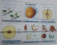 La pomme (affiche scolaire) Petite Section, Grande Section, Pomes, Cycle 3, Science, Montessori Activities, Interactive Notebooks, Books To Read, Frans