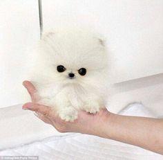 Paris hilton has a new puppy !