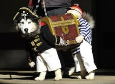 Here's A Dog Dressed As Two Pirates CarryingTreasure via BuzzFeed. Too funny!