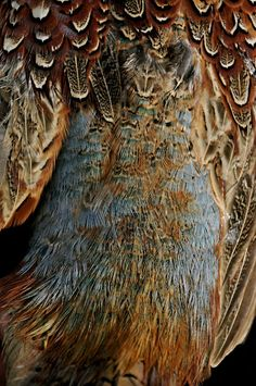 Feathers by www.annabruce-stills.com & Grey Feather http://www.pinterest.com/pin/118149190199824919/