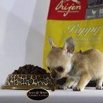 http://altamodaeuropeacanina.com/es/68-pienso-para-perros