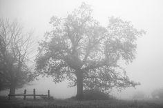 Fog by Markus Meltzer