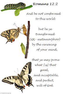 Transformation, Butterfly, Caterpillar, Hope, Purpose in Process Butterfly Transformation, Transformation Quotes, Spiritual Transformation, Butterfly Meaning, Butterfly Quotes, Butterfly Art, Scripture Verses, Bible Verses Quotes, Scriptures