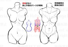 Discover recipes, home ideas, style inspiration and other ideas to try. Drawing Female Body, Body Reference Drawing, Female Torso, Art Reference Poses, Anatomy Reference, Female Bodies, Female Pose Reference, Hand Reference, Female Faces