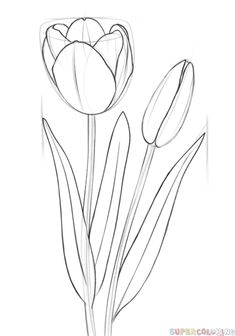 Flowers drawing tutorial pencil art lessons Ideas for 2019 Flower Drawing Tutorials, Drawing Tutorials For Beginners, Flower Sketches, Art Tutorials, Flower Drawings, Flower Drawing For Kids, Beginner Drawing, Flower Pattern Drawing, Pencil Drawings For Beginners