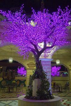 Tivoli Village Las Vegas Lighted Cherry Blossom Trees in purple. Purple Love, All Things Purple, Shades Of Purple, Light Purple, Deep Purple, Purple Stuff, Cherry Blossom Tree, Blossom Trees, Cherry Tree