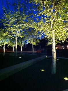 Trees with up lighting