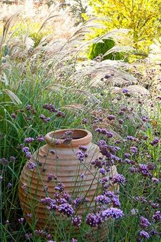 Here is a fabulous and easy way to add charm to the garden. Low maintenance and fairly easy to replicate, this prairie planting combines just a few ingredients: the small, fine-textured foliage of Dwarf Maiden Grass (Miscanthus sinensis) which gracefu Prairie Planting, Prairie Garden, Miscanthus Sinensis Gracillimus, Garden Site, Cottage Garden Plants, Garden Spaces, Border Plants, Low Maintenance Garden, Ornamental Grasses