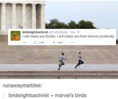 Marvel birds part 5