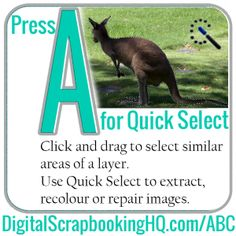 Adobe photoshop elements 10 tutorials for beginners