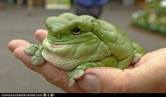 blorp  Is this a real frog? What's it called?