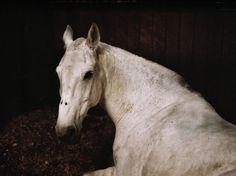 Burial Horses