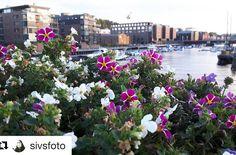Synspunkt. #reiseliv #reiseblogger #reisetips #reiseråd  #Repost @sivsfoto (@get_repost)  #September kveld i #Trondheim.Tatt med min mobil fra #blomsterbrua September evening i Trondheim.