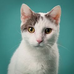 Iris is a chatty gal who loves to give and receive tons of attention