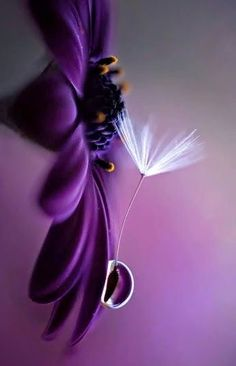 New Images Violet flores Style With their perfectly fashioned fuzzy departs, their lightweight framework and their vibrant, beautif Flowers Nature, My Flower, Pretty Flowers, Purple Flowers, Flower Power, Purple Love, All Things Purple, Purple Rain, Shades Of Purple
