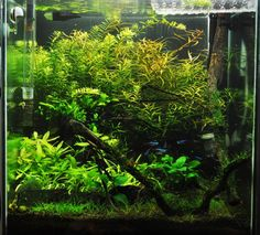 Planted Tank Gallery -