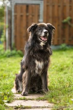 Giacomo (Hunde gross) • Tierschutzverein Stuttgart und sein Tierheim