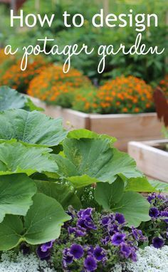 How to design a potager garden. French potager style mixes growing vegetable crops with herbs and edible flowers, as well as decorative companion planting. The result is a pretty, stylish veg plot garden.