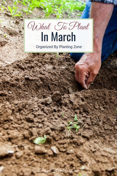 Wanting to get your gardening started but not sure what to plant in March? Get the answers you need here. Wanting to get your gardening started but not sure what to plant in March? Get the answers you need here.