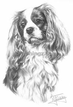 Kleurplaat Cavalier King Charles Spaniel Drawing On Pinterest Dog Portraits Pet Portraits And