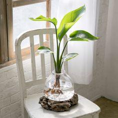 Rattan Planters, Planter Table, Indoor Garden, Indoor Plants, Interior Plants, Aquatic Plants, Water Plants, Glass House, Plant Decor