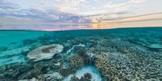 Google Street View Maps Coral Reefs, Marine Sanctuaries For Preservation Research