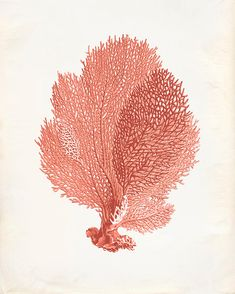 Vintage Sea Fan Coral Print 8x10 P251 by OrangeTail on Etsy, $14.00