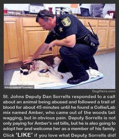 Dog rescue ❤️❤️. Click link to read more about this awesome story- http://www.dogheirs.com/tamara/posts/2626-compassionate-deputy-who-rescued-stabbed-dog-plans-to-adopt-her