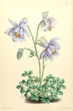 6, 1867 - The Floral magazine; - Biodiversity Heritage Library