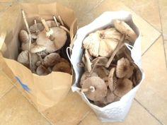 gomba tárolása Stuffed Mushrooms, Ice Cream, Vegetables, Desserts, Food, Stuff Mushrooms, No Churn Ice Cream, Tailgate Desserts, Deserts