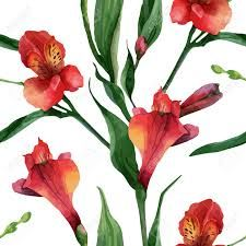 Image result for alstroemeria drawing