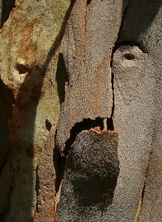 Strange Monster in Tree Trunk by ronsphotos  STRAIGHT PHOTO; NO MANIPULATION!
