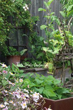 Gemüsegarten mit Hochbeet Beets, Garden, Plants, Calendula, Delphinium, Summer Garden, Summer Kids, Dahlias, Compost
