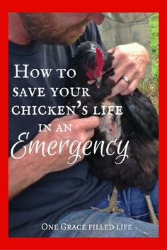 How to save your chicken's life in an emergency. Pinning for later, touch wood.